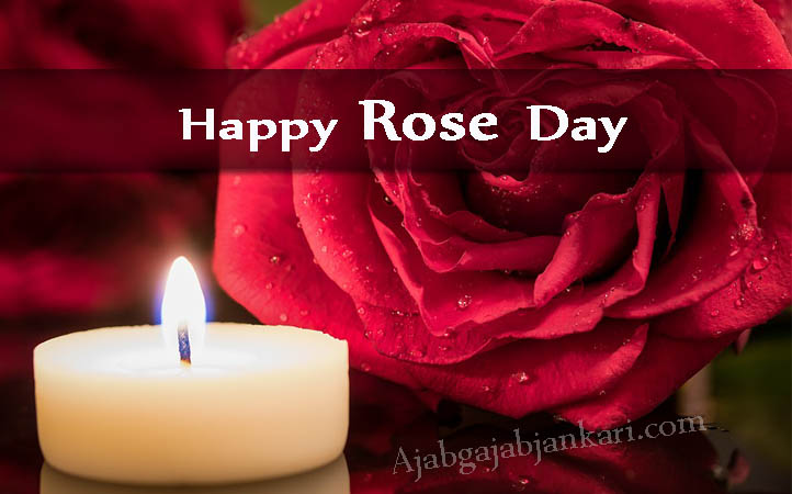 Happy Rose Day Quotes, Images and Wishes Impress Your Valentine