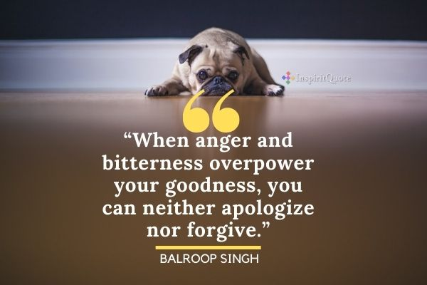 Best Apology Quotes